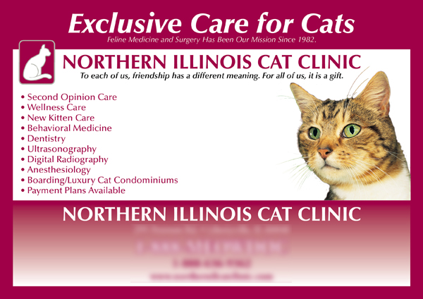 veterinary postcard marketing