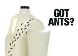 ant control marketing