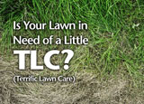 Lawn Maintenance Advertising