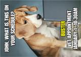 veterinarian postcard design